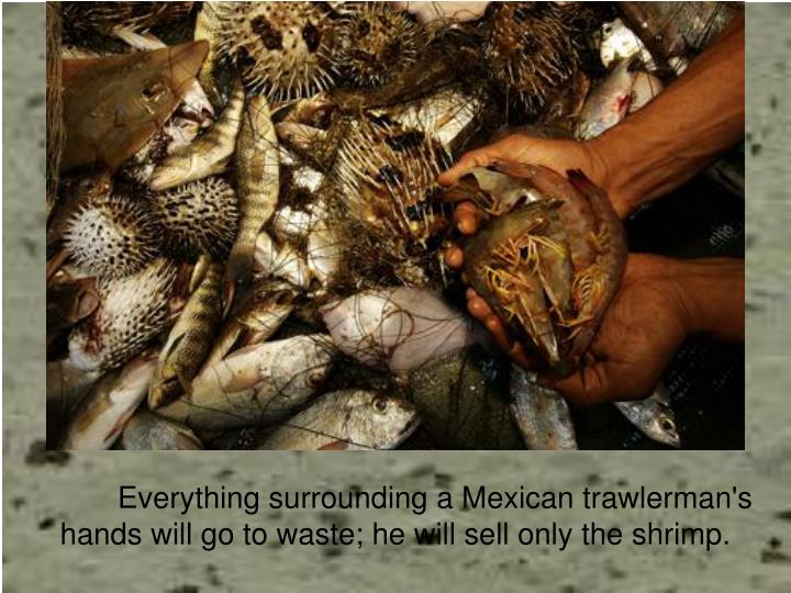 Everything surrounding a Mexican trawlerman's hands will go to waste; he will sell only the shrimp.