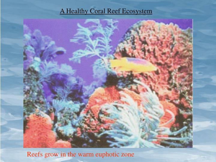 A Healthy Coral Reef Ecosystem
