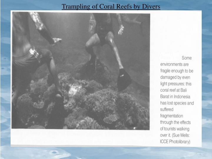Trampling of Coral Reefs by Divers