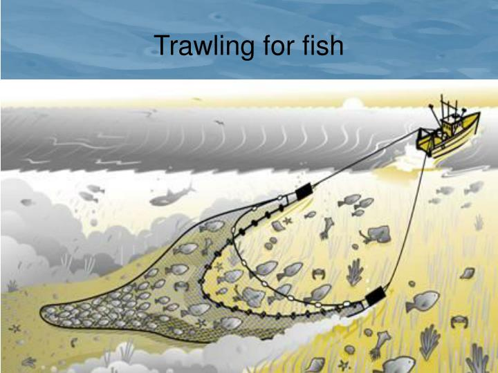 Trawling for fish