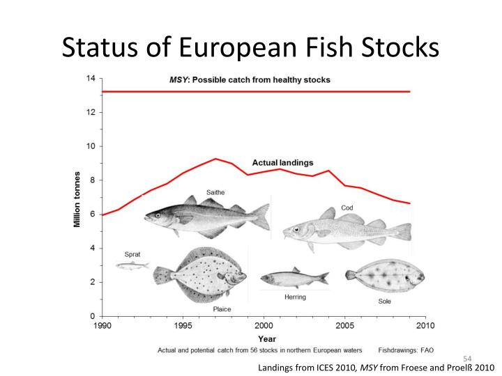 Status of European Fish Stocks