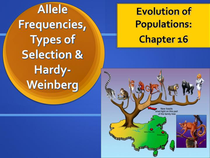 allele frequencies types of selection hardy weinberg n.