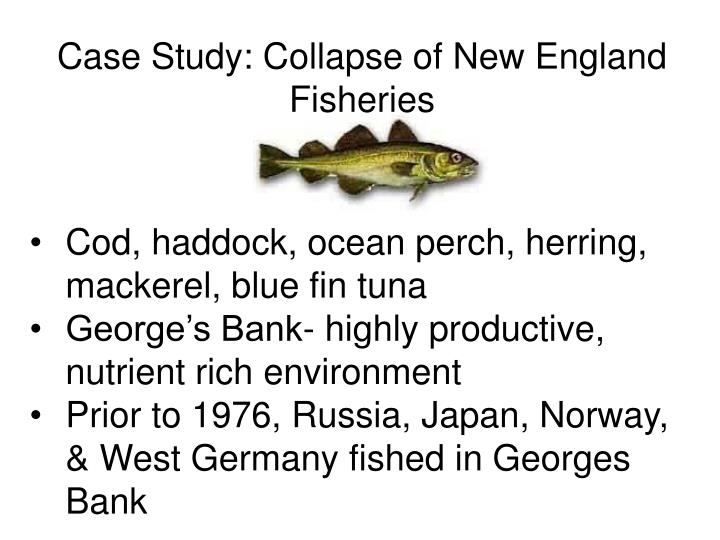 Case Study: Collapse of New England Fisheries