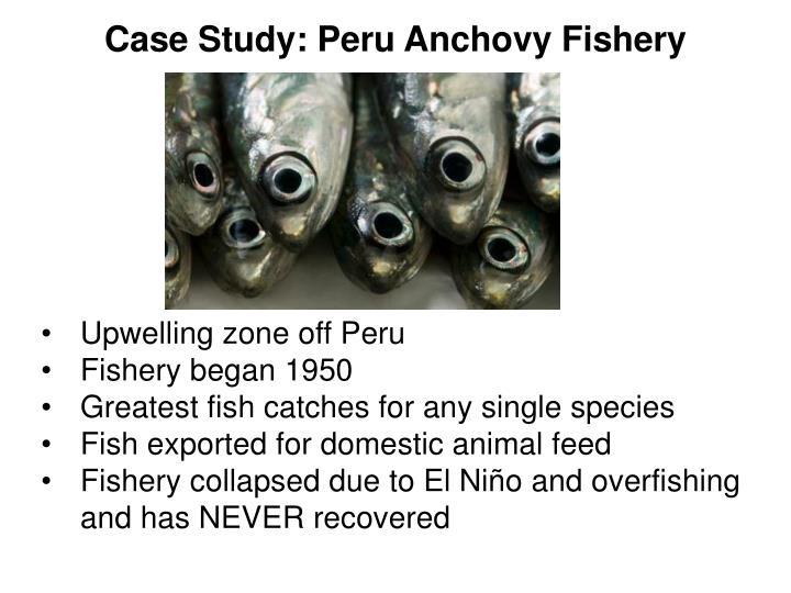 Case Study: Peru Anchovy Fishery