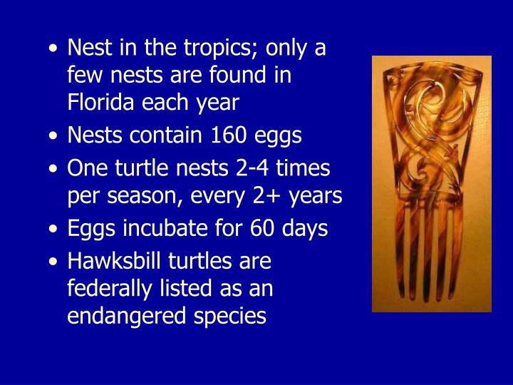 Nest in the tropics; only a few nests are found in Florida each year