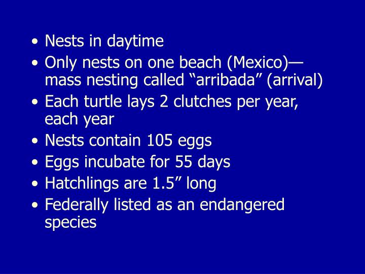 Nests in daytime