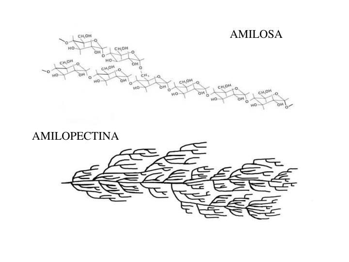 AMILOSA