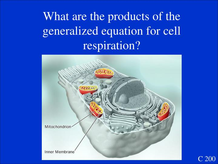What are the products of the generalized equation for cell respiration?