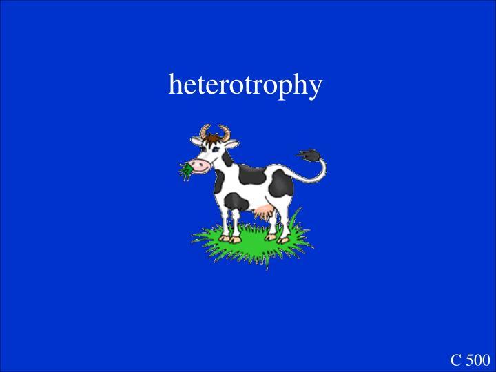 heterotrophy