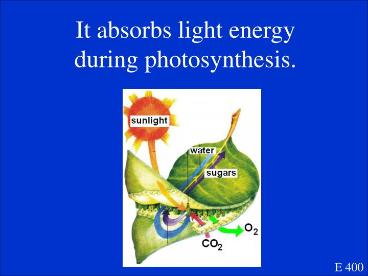 It absorbs light energy during photosynthesis.