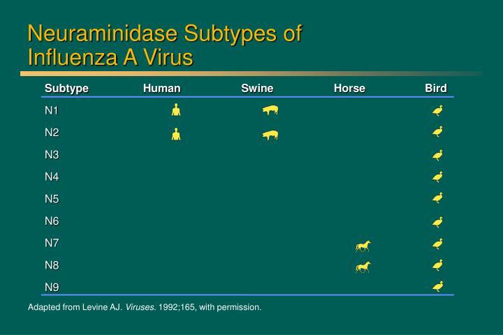 Neuraminidase Subtypes of