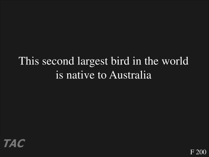 This second largest bird in the world is native to Australia