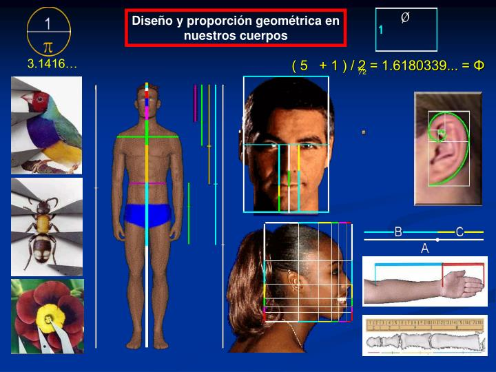 Diseño y proporción geométrica en nuestros cuerpos