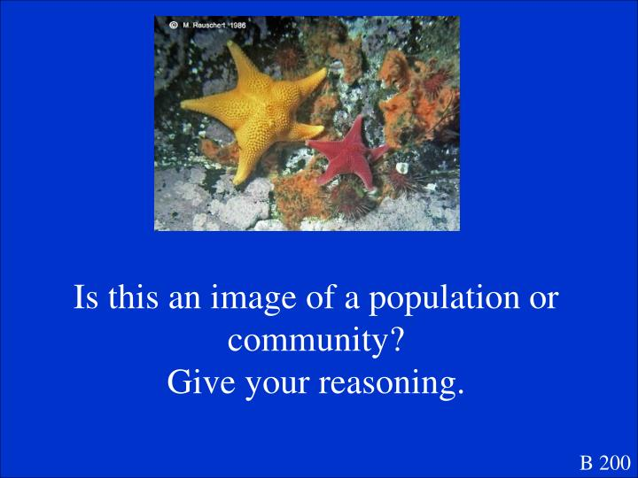 Is this an image of a population or community?