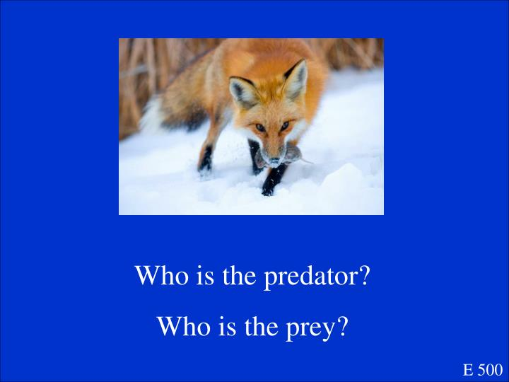 Who is the predator?