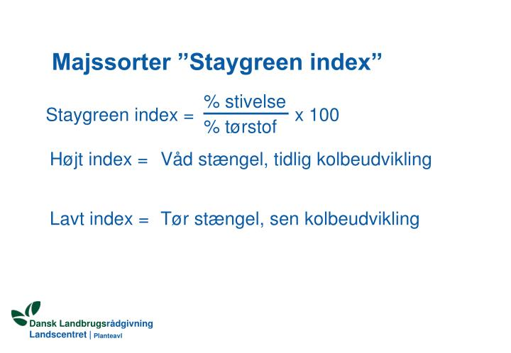 "Majssorter ""Staygreen index"""