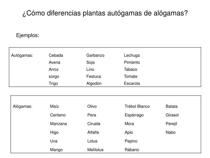 ¿Cómo diferencias plantas autógamas de alógamas?