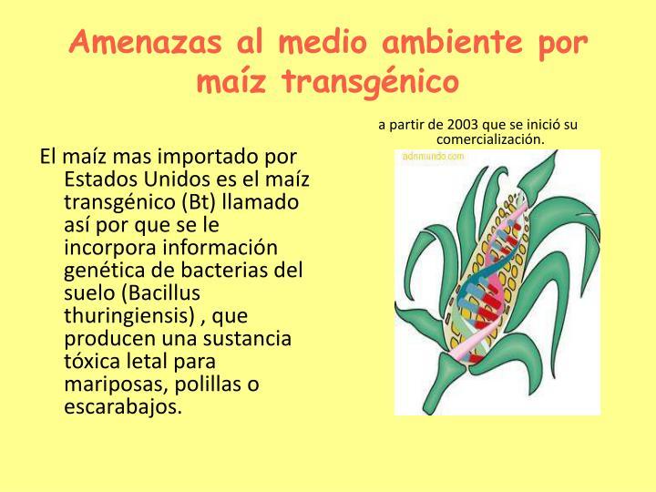 Amenazas al medio ambiente por maíz transgénico