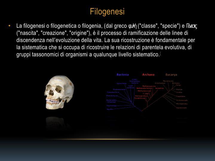 La filogenesi o filogenetica o filogenia, (