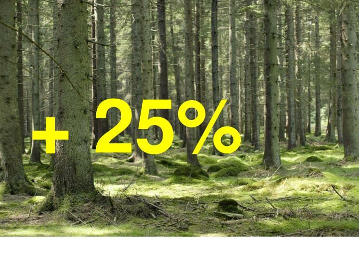 + 25%