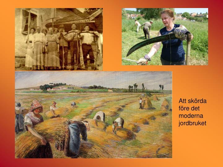 Att skörda före det moderna jordbruket
