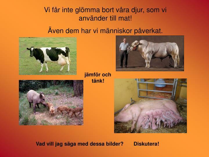 Vi får inte glömma bort våra djur, som vi använder till mat!