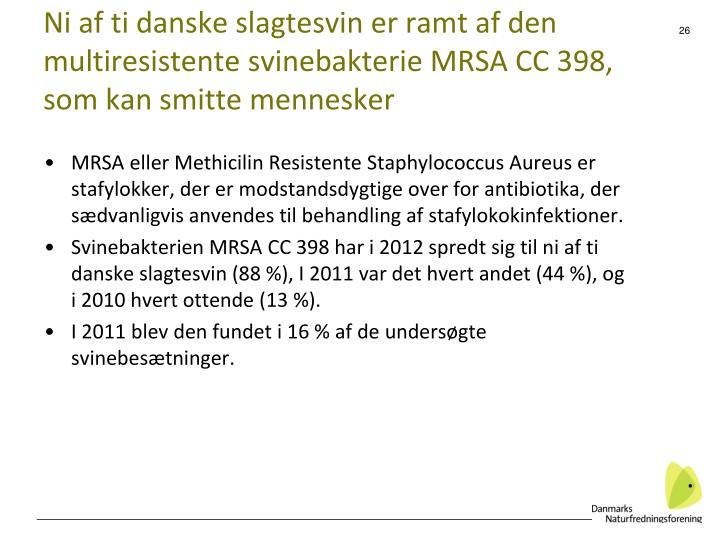 Ni af ti danske slagtesvin er ramt af den multiresistente svinebakterie MRSA CC 398, som kan smitte mennesker