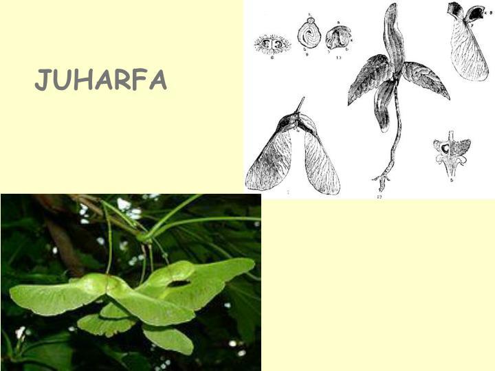 JUHARFA
