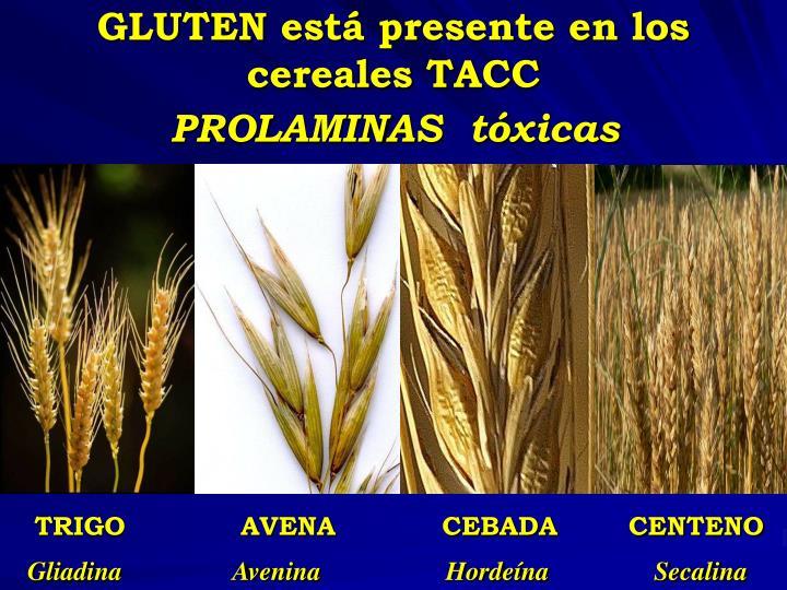 GLUTEN está presente en los cereales TACC