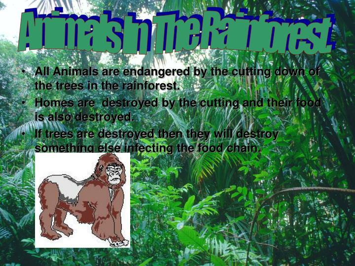 Animals In  The Rainforest.