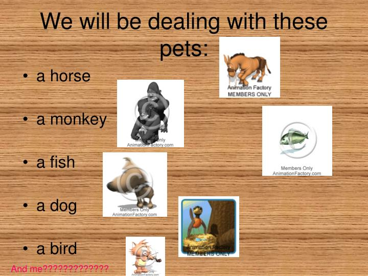 We will be dealing with these pets
