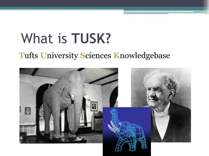 What is tusk