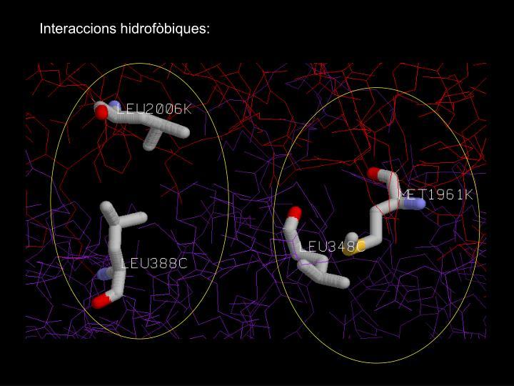 Interaccions hidrofòbiques: