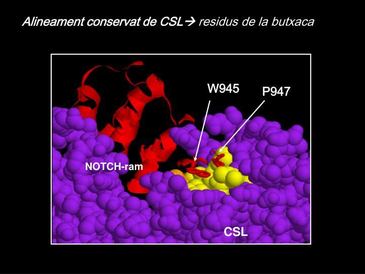 Alineament conservat de CSL