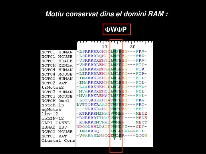 Motiu conservat dins el domini RAM :