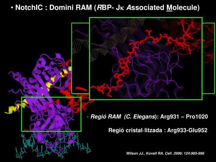 NotchIC : Domini RAM (