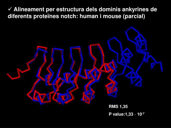 Alineament per estructura dels dominis ankyrines de diferents proteïnes notch: human i mouse (parcial)