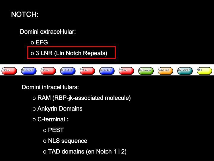 NOTCH: