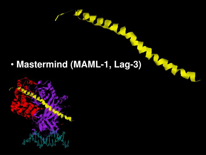 Mastermind (MAML-1, Lag-3)