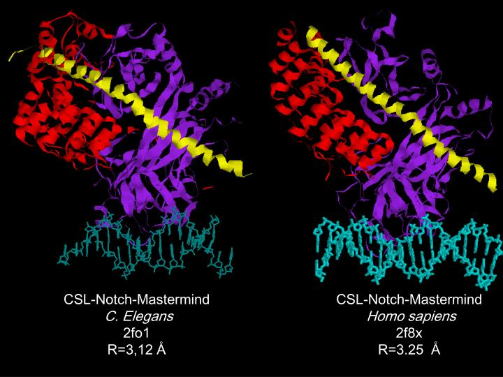 CSL-Notch-Mastermind