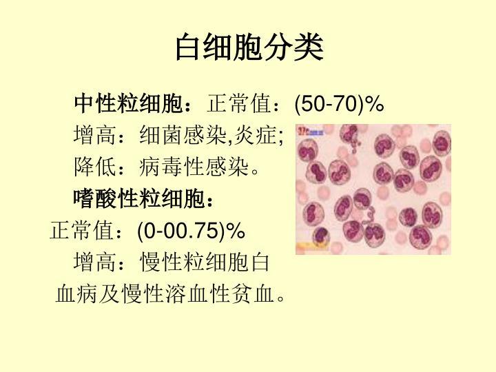 白细胞分类