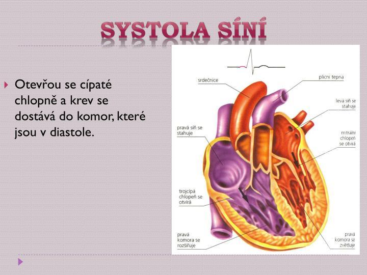 Systola síní