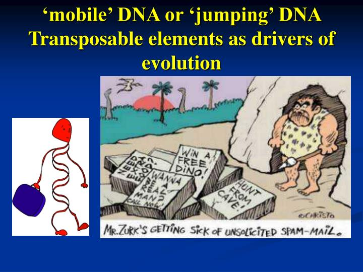 mobile dna or jumping dna transposable elements as drivers of evolution n.