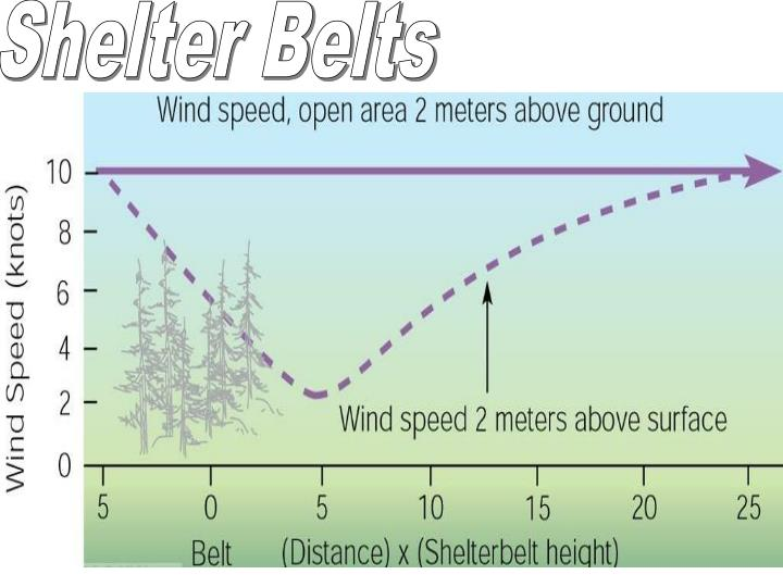 Shelter Belts