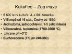 kuku ice zea mays