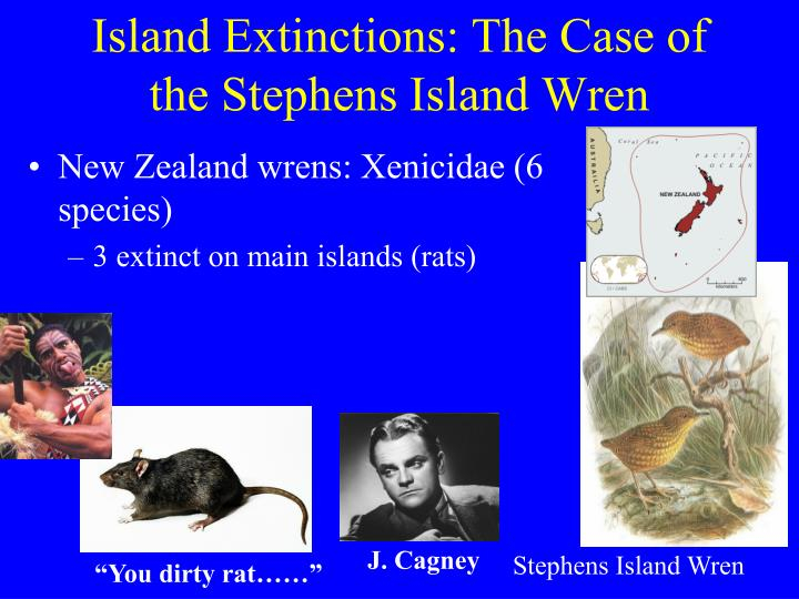 Island Extinctions: The Case of the Stephens Island Wren