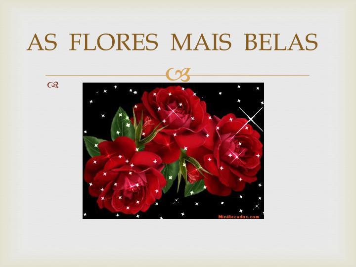 As flores mais belas