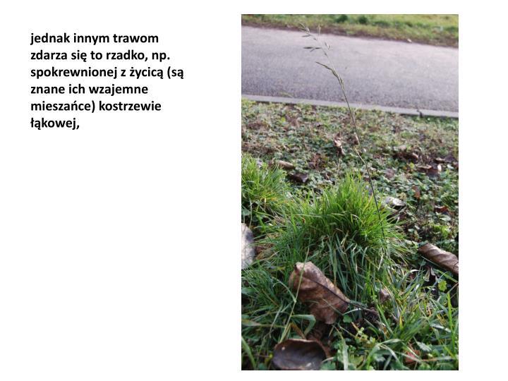 jednak innym trawom zdarza się to rzadko, np. spokrewnionej z życicą (są znane ich wzajemne mieszańce) kostrzewie łąkowej,