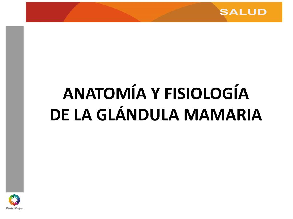 PPT - ANATOMÍA Y FISIOLOGÍA DE LA GLÁNDULA MAMARIA PowerPoint ...