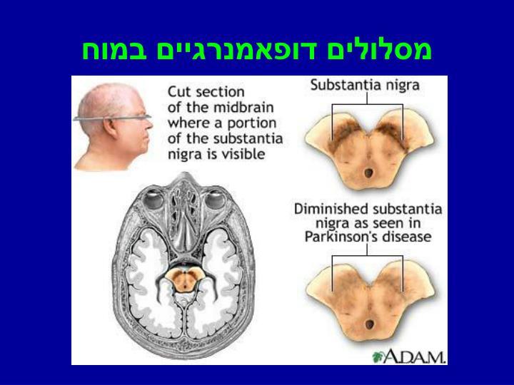 מסלולים דופאמנרגיים במוח